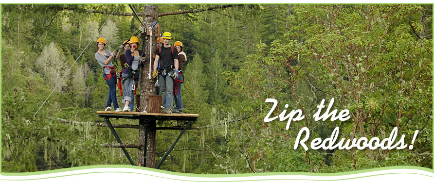 Zip the Redwoods